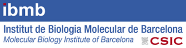 Molecular Biology Institute of Barcelona and Institute for Research in Biomedicine (IRB) Barcelona Science Park (IBMB-CSIC)